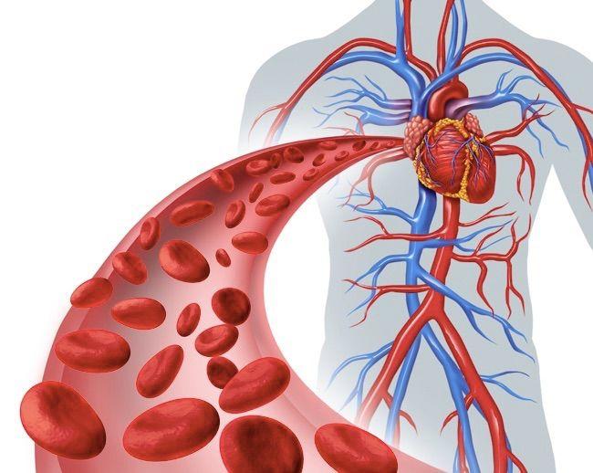 血行促進の効果