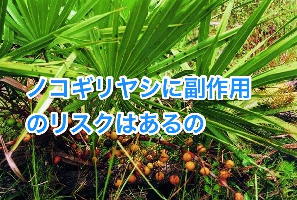 nokogiriyashi