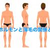 薄毛・抜け毛の原因は男性ホルモンが影響?ハゲとの関係性を解説